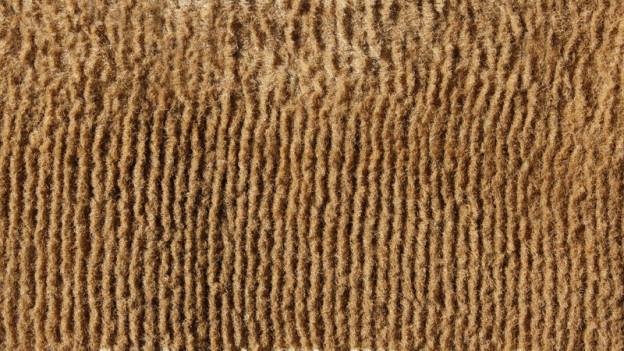Carpet Mold Identification Prevention And Removal